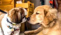 3-animais-socializando-parque-pra-cachorro-quintal-animal-moema