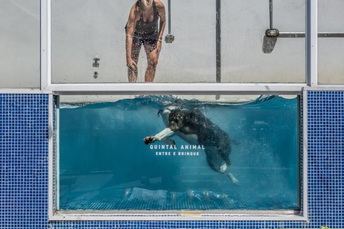 4-foto-piscina-pra-cachorro-quintal-animal-moema