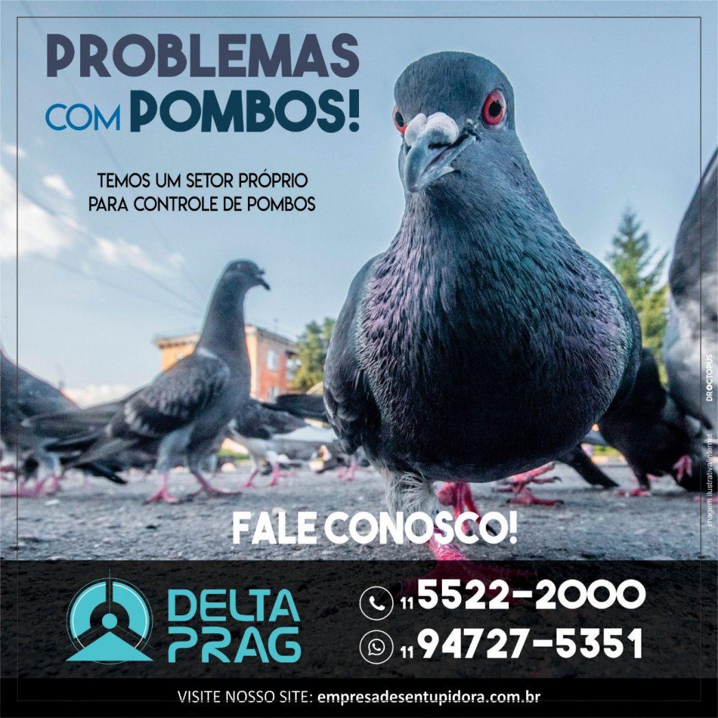 pombos-dedetizacao