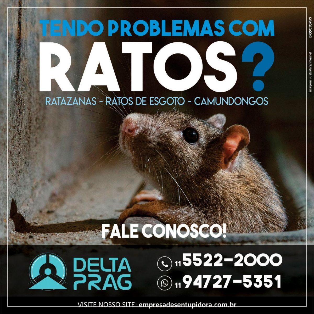ratos-dedetizacao