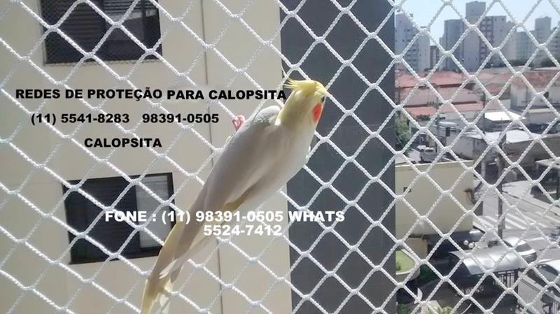 5 - Calopsita.